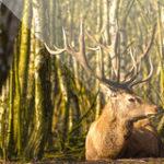 Easy Deer Hunting Calls – Finest Deer Hunting Calls which Every Deer Hunter Must Use