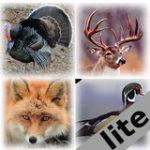 Pro Animal Calls lite
