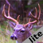 Deer Calls & Sounds lite