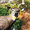 Hunting and Shooting Challenge