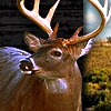 Bag a Monster Buck